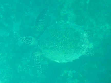 海亀.JPG